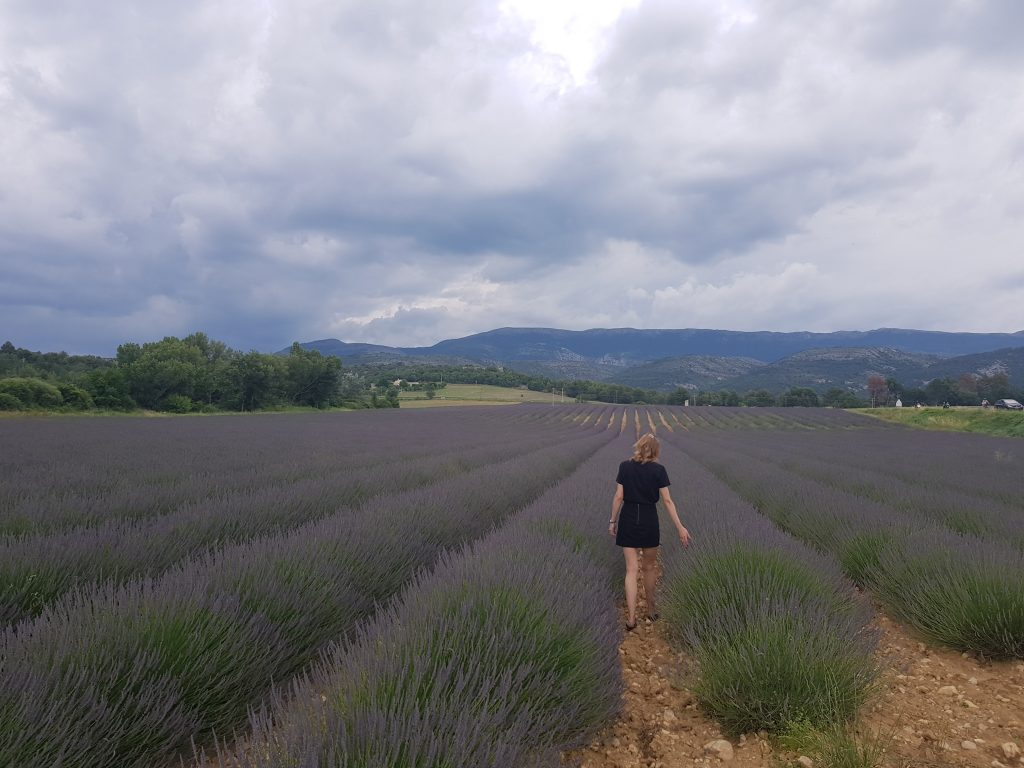 French Riviera things to do Catch the smell of lavenda fields in Valensole
