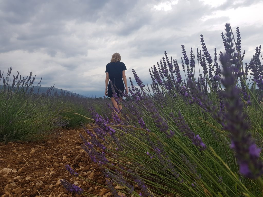 French Riviera things to do Catch the smell of lavenda fields in Valensole!