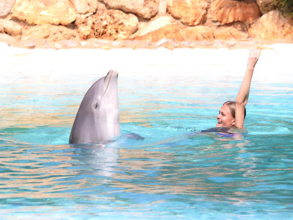 Things to do in Algarve Portugal - Visit Zoomarine and swim with dolphins