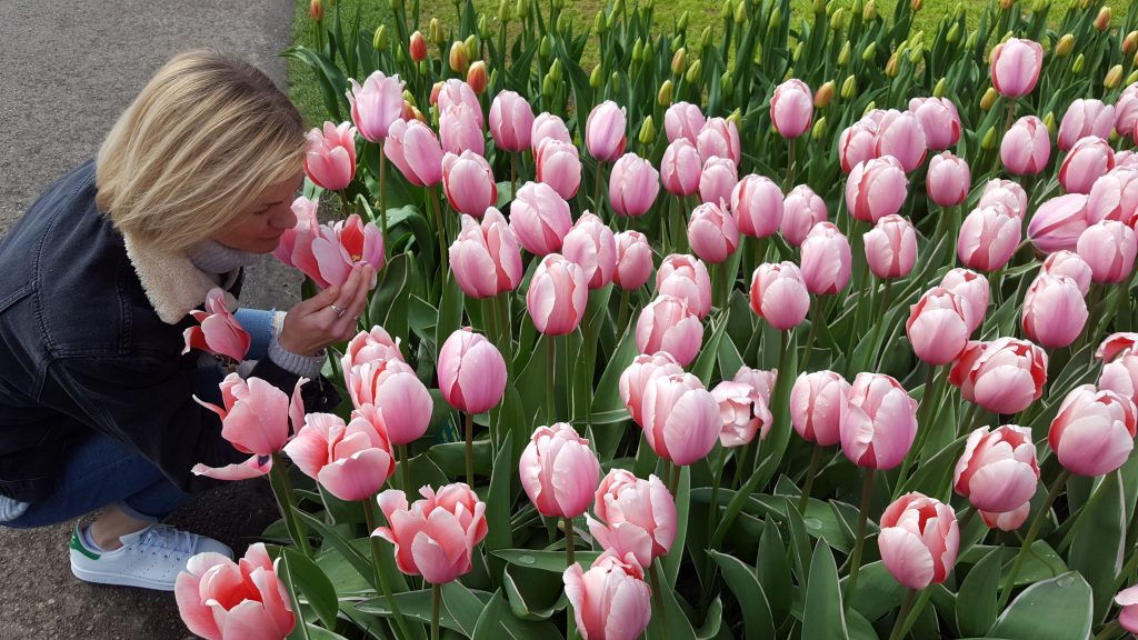 Travel Bucket List Ideas - Travel to Keukenhof to see tulips in bloom - Holland