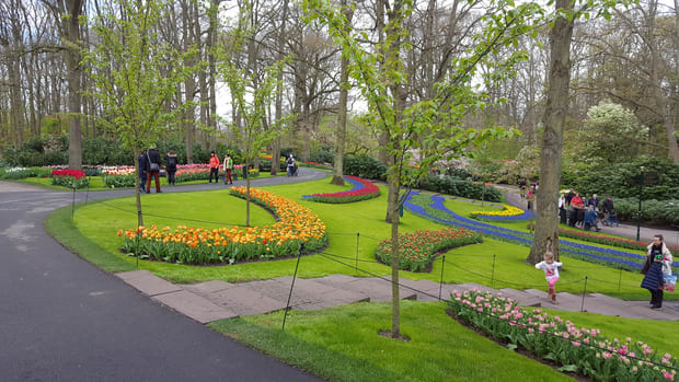 Tulip bloom Keukenhof gardens - How to get to Keukenhof from Amsterdam Holland