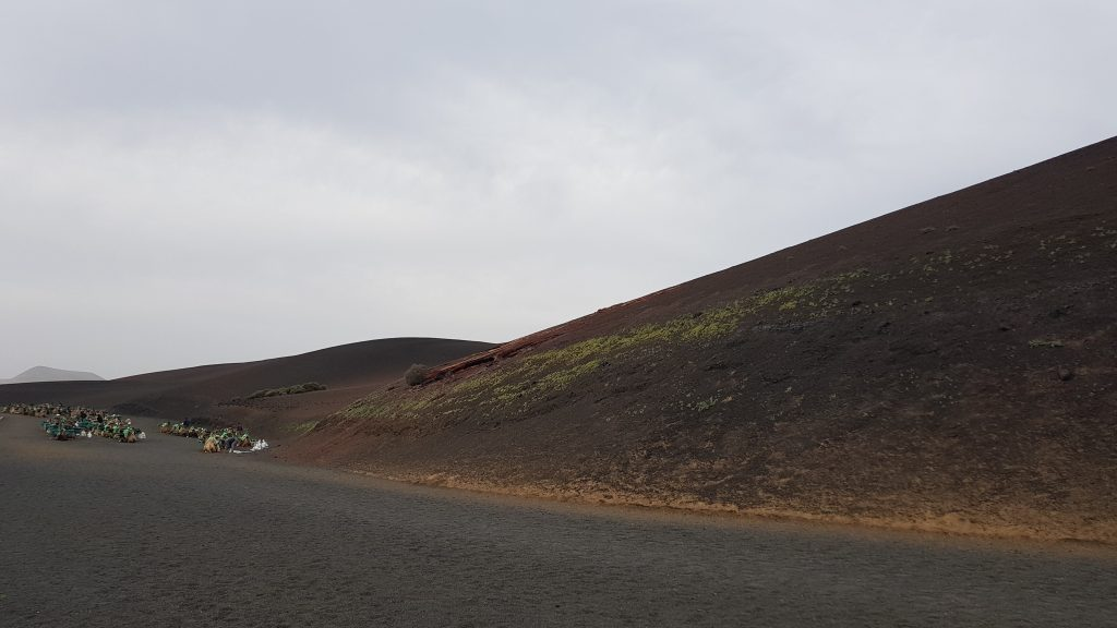 Things to do in Lanzarote - Camel Ride