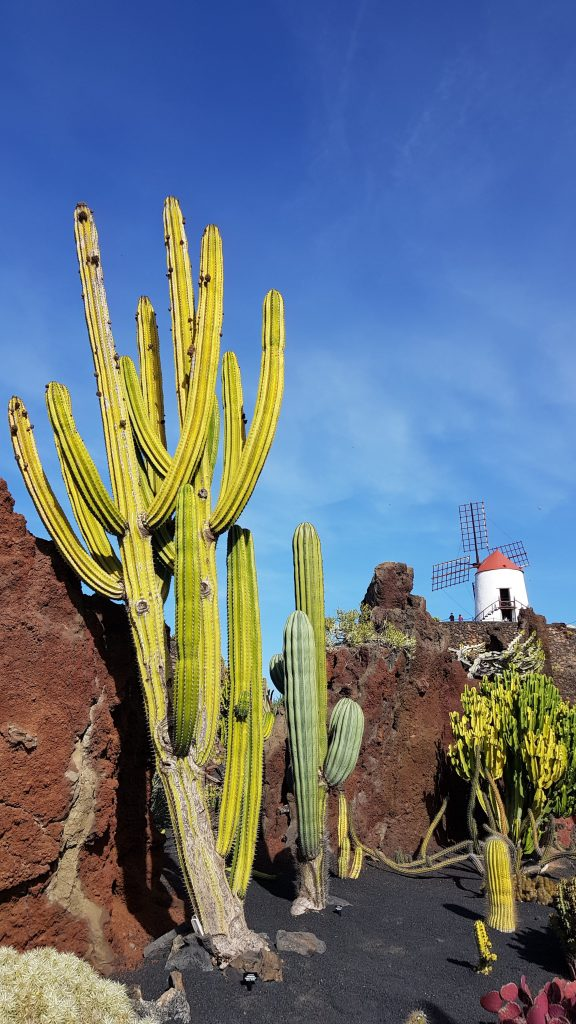 Things to do in Lanzarote - The Cactus Garden Spain