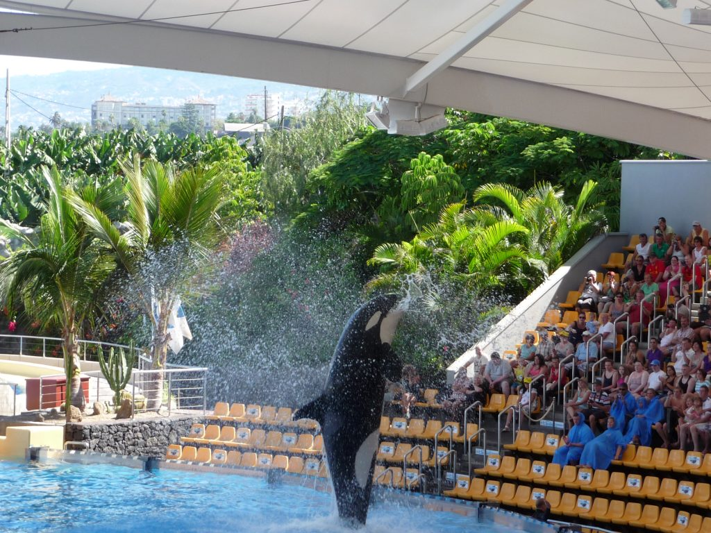 Spain Things to do - Loro Park