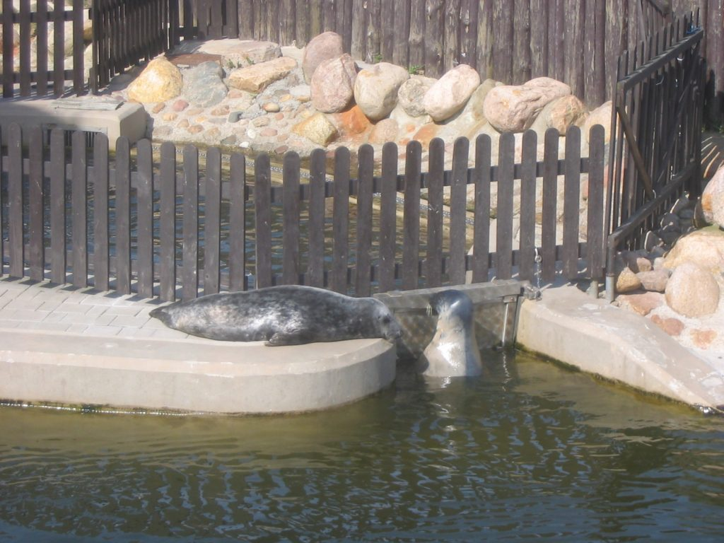 Seal Sanctuary Hel Poland