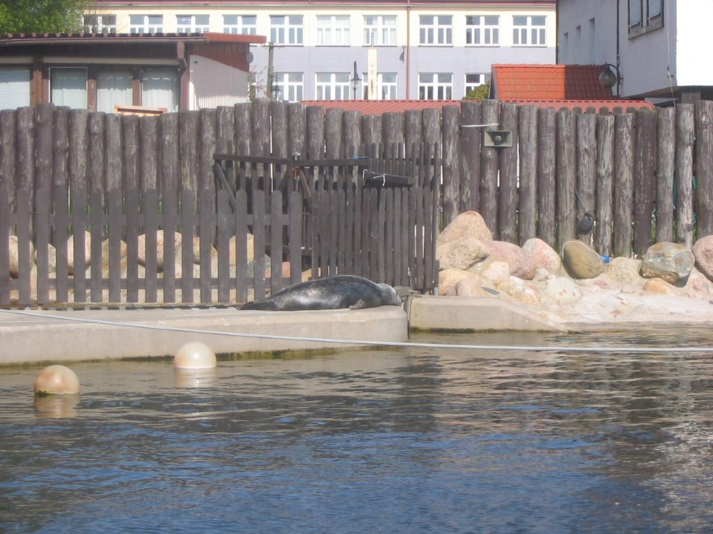 Seal Sanctuary in Hel Poland