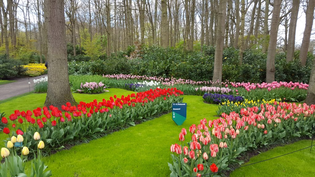 Amsterdam what to do - Visit Keukenhof Gardens
