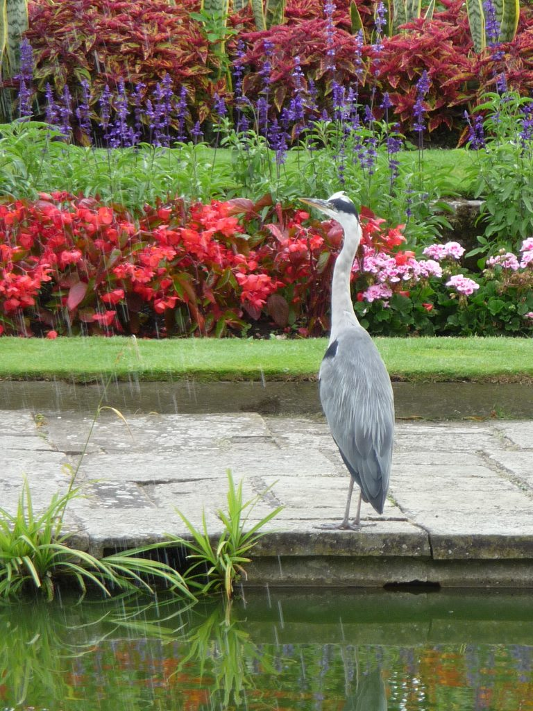 Best parks in London - St James's Park