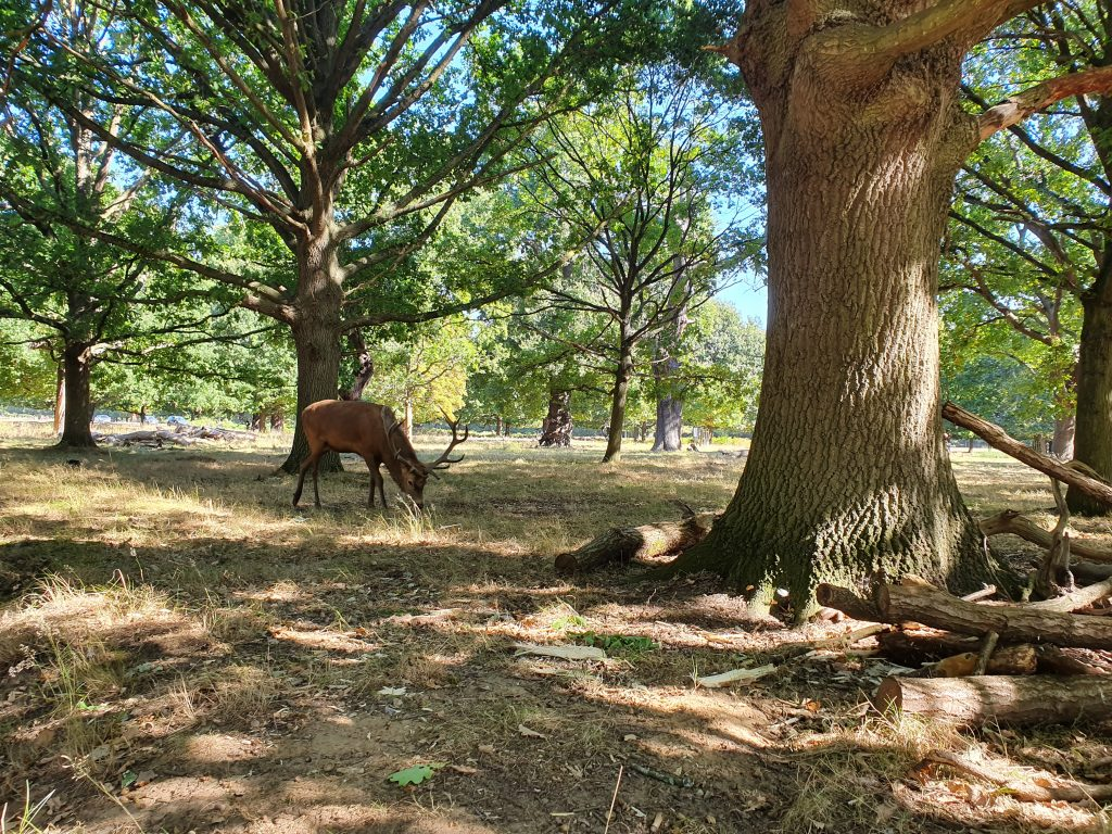 Richmond Park - things to do in London