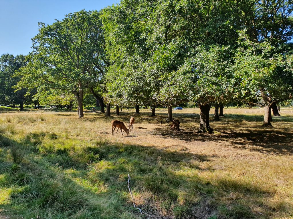 Famous landmarks in London - Richmond Park