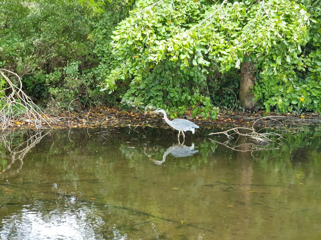What to see in St. Albans - Wildlife