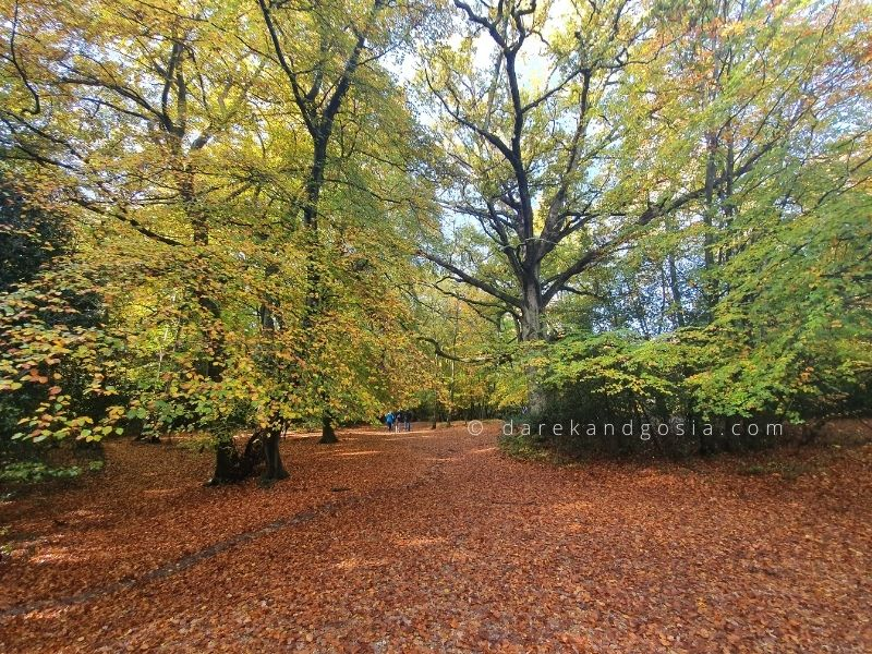 Best time to visit Burnham Beeches