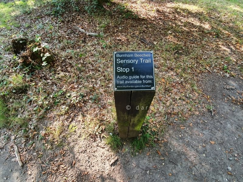Burnham Beeches walks - Sensory trail