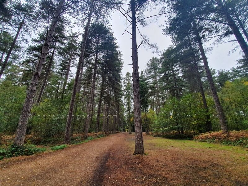 Best forests near London - Black Park Country Park