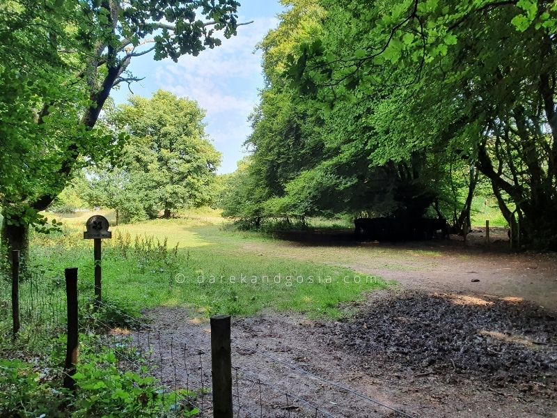 Best forests near London - Coombe Hill Forest
