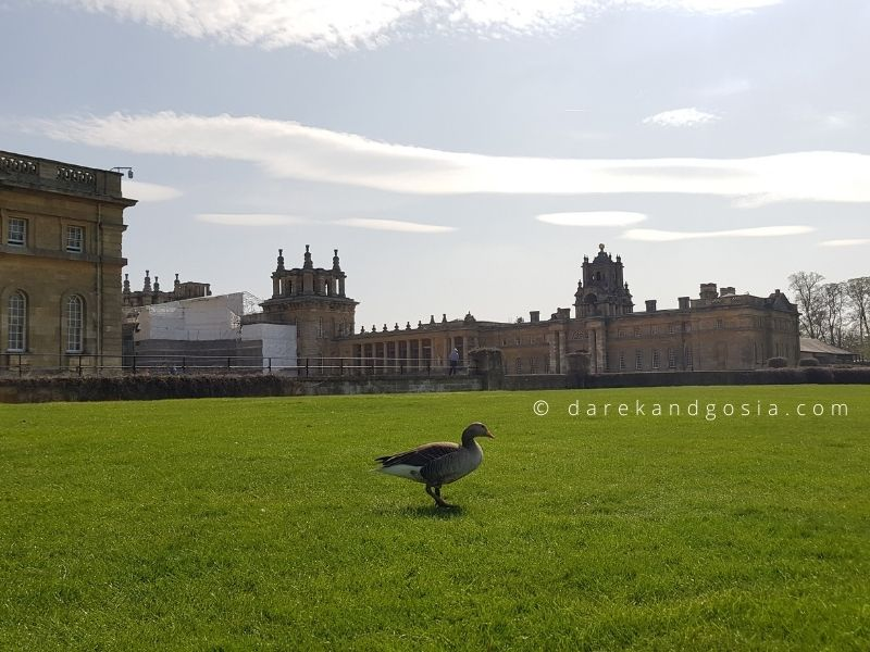Best things to do in Oxfordshire - Blenheim Palace