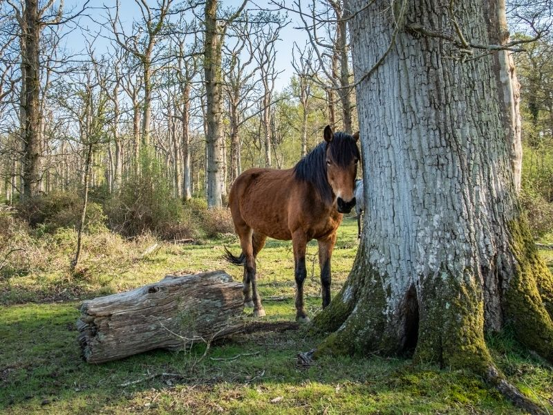Most scenic places in UK - New Forest