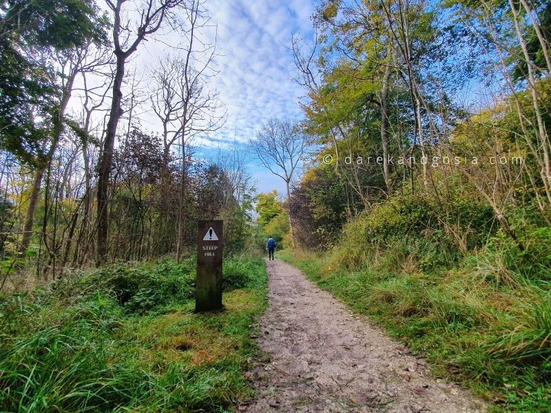 Walks in the Chilterns - Wendover Woods