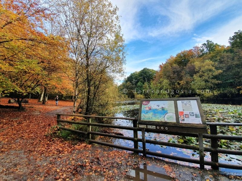 Best places in the south of England - Burnham Beeches