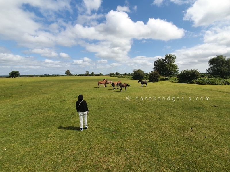 Places close to London to visit - New Forest