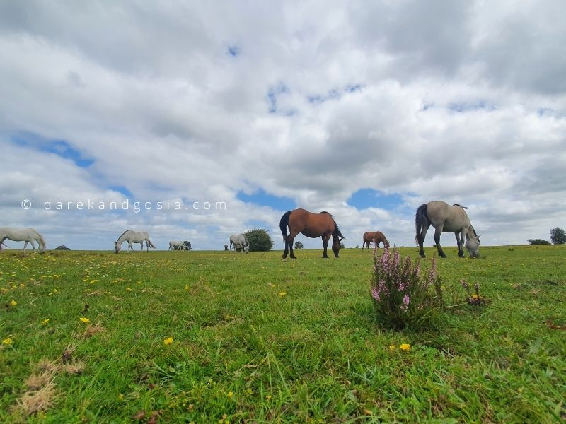 Places to visit outside London by car - New Forest